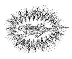 SALAMANDRA. Para la mitología, es un ser que habita en el fuego, para custodiarlo