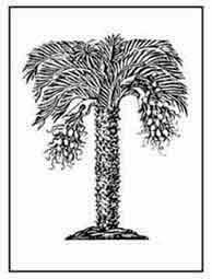 LA PALMERA . Nada engendra la palmera que no sea provechoso. W.H. Barón de Von Hohberg. 1675. Dibujo y adaptación de Ex libris personal sobre el original